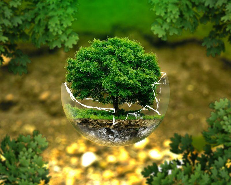 Semana do Ambiente